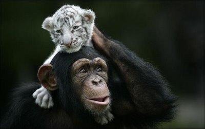 Állati barátságok 10