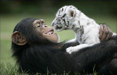 Állati barátságok 11
