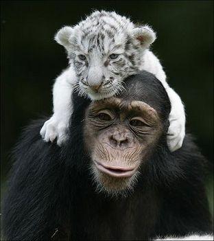 Állati barátságok 14