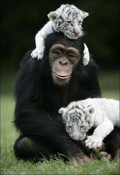 Állati barátságok 1
