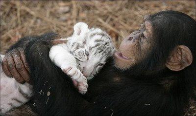 Állati barátságok 3