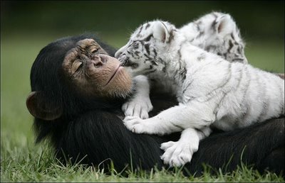 Állati barátságok 4