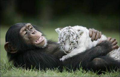 Állati barátságok 5