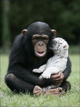 Állati barátságok 6