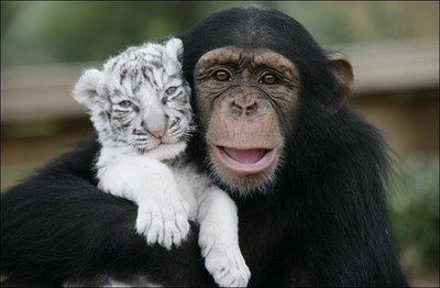 Állati barátságok 7