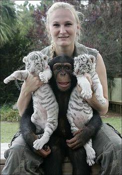 Állati barátságok 8
