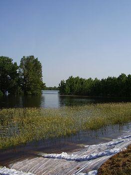 árvízvédelem