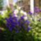 Virágaim_02