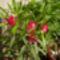 Virágaim_04