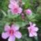 Virágaim_05