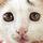 Cat-001_87425_269121_t