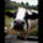 Cow_87428_844152_t