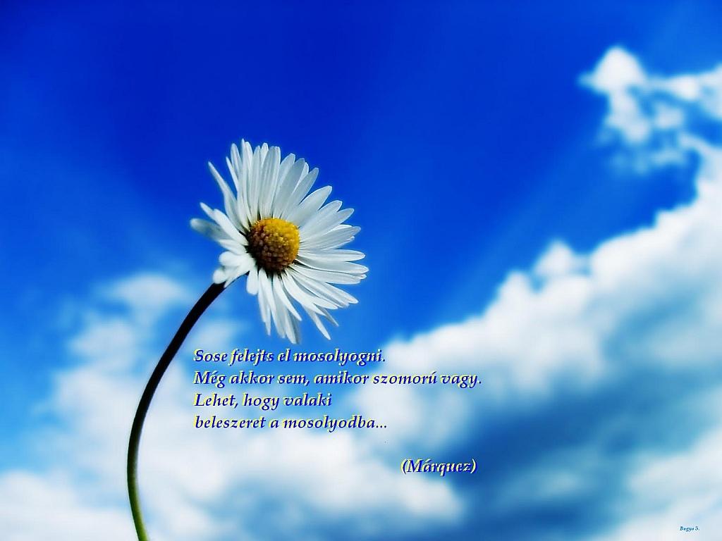 rövid idézetek a mosolyról Béke: Gabriel Garcia Marquez a mosolyról (kép)