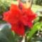 virágaim_07