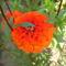 virágaim_09