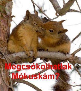 MEGCSÓKOLHATLAK MÓKUSKÁM