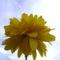 Napfény és virág