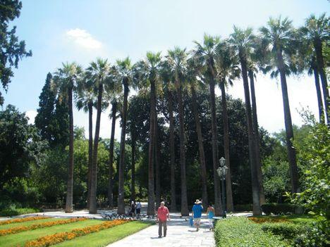 hatalmas pálmák a főváros szivében