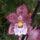 Király Monika orchideái