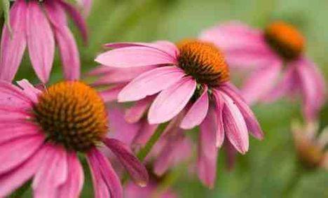 Lángvörös kasvirág közeli kép