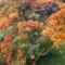 Balatoni őszi sétám képeiből.... 1