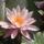 Hné Zsuzsa virágai