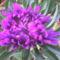 Virág.