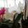 Virágok -Törölt felhasználóktól