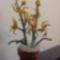 Orchideák gyöngyből 2