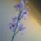 Orchideák gyöngyből 6