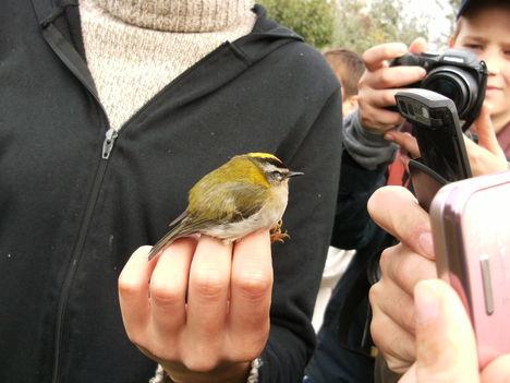 2010.10.2-3 madárgyűrűzés 18