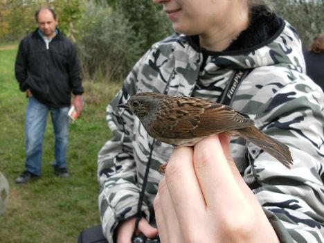 2010.10.2-3 madárgyűrűzés 30