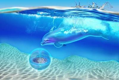 delfin_06