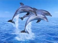 delfin_07
