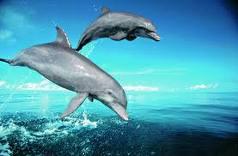 delfin_09