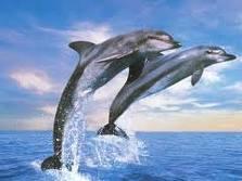 delfin_11
