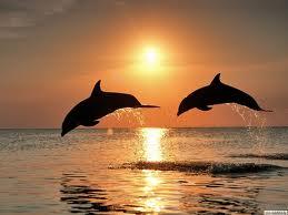 delfin_14