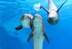 delfin_18