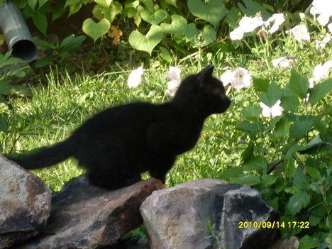 2010. Ő Kormika