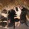 Kép 249 Lega puppies