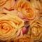 narancssarga rozsam
