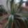 Valent Hajnalka kaktuszai