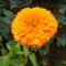 virágaim_11