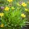 Virágaim_12