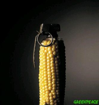 GMO kampány