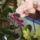Orchideak_800965_97643_t