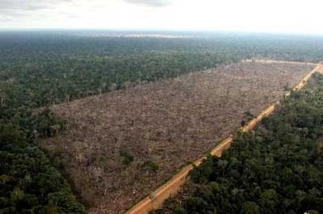 Őserdő kampány
