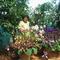 szép virág mamival
