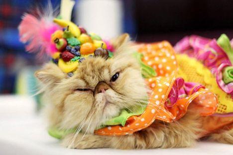 03_Algonquin Cat Fashion Show