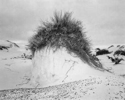 homokbucka fej